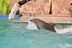 Orenburg, Russia - 15 ottobre 2017 anno: Istruttore dei delfini e dei delfini Fotografia Stock Libera da Diritti