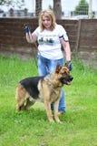 Orenburg Ryssland, 11 Juni 2017 år: Herde på hundshowen Fotografering för Bildbyråer