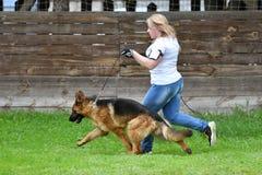 Orenburg Ryssland, 11 Juni 2017 år: Herde på hundshowen Royaltyfria Bilder