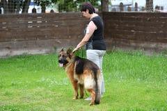 Orenburg Ryssland, 11 Juni 2017 år: Herde på hundshowen Arkivfoton