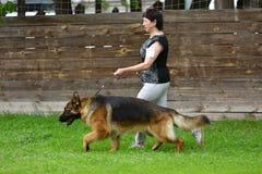 Orenburg Ryssland, 11 Juni 2017 år: Herde på hundshowen Royaltyfri Foto