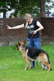 Orenburg Ryssland, 11 Juni 2017 år: Herde på hundshowen Arkivbild