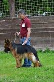 Orenburg Ryssland, 11 Juni 2017 år: Herde på hundshowen Royaltyfri Bild