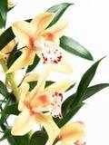 Orenge flower Royalty Free Stock Images
