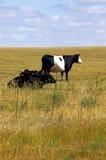 Oreo krowa Fotografia Royalty Free