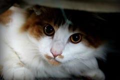 Oreo under soffan Royaltyfri Bild