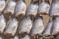 Oreochromis niloticus on net Stock Photo