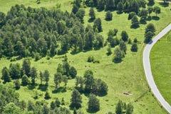 Orest äng en väg och några kor, Hohe trollstav, Österrike royaltyfri fotografi