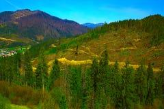 Orest και βουνά, δάσος περικοπών στις κλίσεις στοκ εικόνα με δικαίωμα ελεύθερης χρήσης