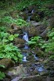 Orest на водопаде Canyanka Стоковое Фото