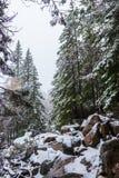 Orest i bergen i vinter royaltyfri foto