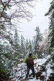 Orest i bergen i vinter royaltyfri fotografi