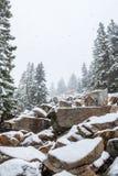 Orest i bergen i vinter arkivfoto