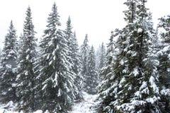 Orest i bergen i vinter arkivbilder