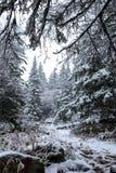 Orest i bergen i vinter fotografering för bildbyråer