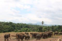Orfanotrofio dell'elefante Immagine Stock