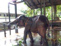 Orfelinato del elefante Imágenes de archivo libres de regalías