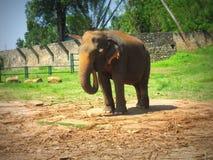 Orfelinato del elefante en Sri Lanka imagenes de archivo
