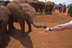 Orfelinato Nairobi de Sheldrick fotografía de archivo libre de regalías