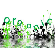 Orgânico Ilustração do Vetor