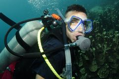 Organ coral and scuba diver. Male scuba diver swimming over coral reef Stock Photos