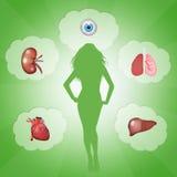 Organ donation. Funny illustration of organ donation Stock Photo