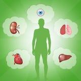 Organ donation Royalty Free Stock Image