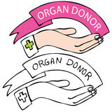 Organ Donor. An image of a hand with organ donor banner Stock Photography