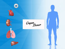 Organ donor. Illustration of organ donor for trasplant royalty free illustration