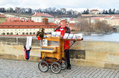 Organ grinder in city of Prague Stock Photos