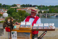 Organ grinder with monkey royalty free stock photography