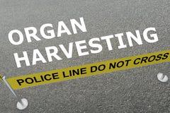 Organ Harvesting concept Royalty Free Stock Photos