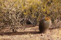 Organ Pipe Cactus National Monument, Arizona, USA Royalty Free Stock Photo