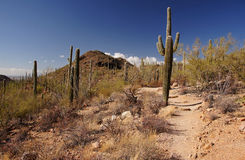 Organ Pipe Cactus National Monument, Arizona, USA Stock Image