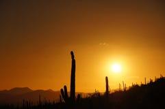 Organ Pipe Cactus National Monument, Arizona, USA Royalty Free Stock Images
