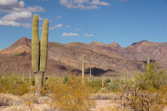 Organ Pipe Cactus National Monument, Arizona, USA Royalty Free Stock Photography