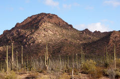 Organ Pipe Cactus National Monument, Arizona, USA Royalty Free Stock Photography