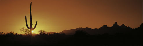 This is Organ Pipe Cactus National Monument at sunrise. Silhouetted is a Saguaro cactus. Royalty Free Stock Images