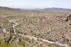 Organ Pipe Cactus National Park, Arizona Stock Photo