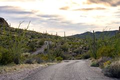 Ajo Mountain Drive, an unpaved road winds through Organ Pipe Cactus National Monument in Arizona. Ocotillo and Saguaro cactus line. Organ Pipe National Monument royalty free stock photo