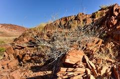Organ Pipes - Twyfelfontein, Damaraland, Namibia Stock Photography