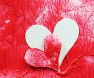 Free Organ Transplant Stock Photos - 13771153