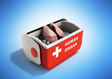 Organ transportation concept open human organ refrigerator box r Royalty Free Stock Photography