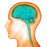 Organe central d'organes de corps humain de Brain Anatomy illustration libre de droits