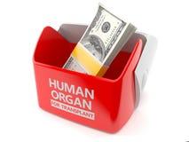 Organe humain pour le concept de greffe Photographie stock libre de droits