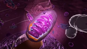 Organelles inside Eukaryote, focus on mitochondria - 3d illustration