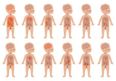 Organes humains, anatomie d'enfant Image libre de droits