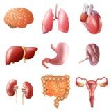 Organes humains réglés illustration de vecteur