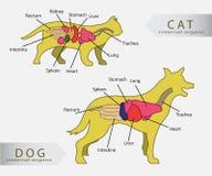 Organes internes de base de chat et de chien Images libres de droits