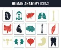 Organes internes humains Ensemble d'anatomie Vecteur Image stock